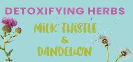 Detoxifying Herbs: Milk Thistle and Dandelion